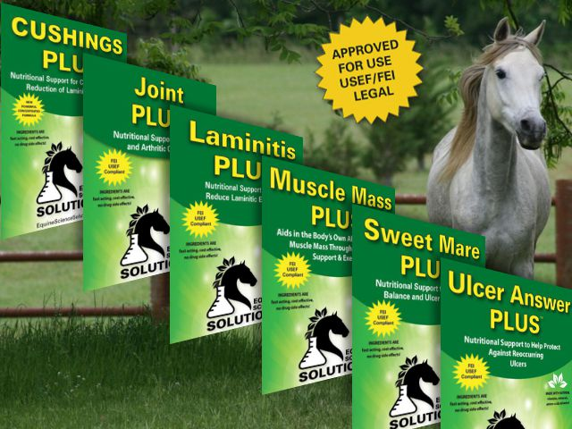 Get Your Horse to Perform Better