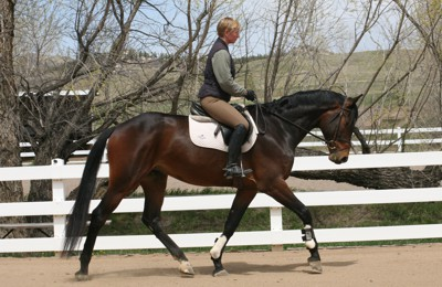 Protect Your Horse Against Reoccurring Joint Issues