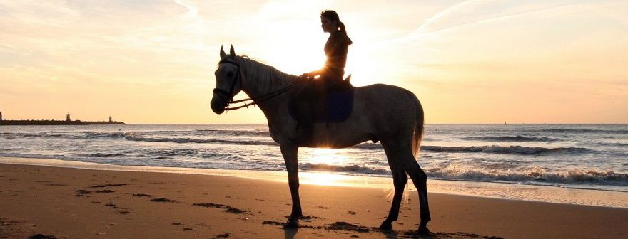 Help Your Horse Fight Bacterial, Fungal & Infections