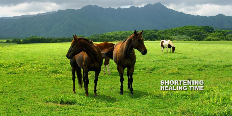 Get your horse healthy faster