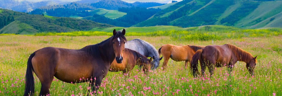 Protect Your Horse Against Reoccurring Ulcers